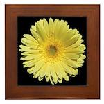 Yellow Gerbera Daisy Framed Tile