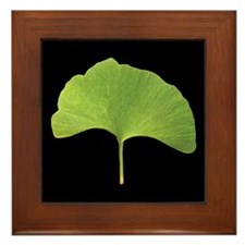 Ginkgo Leaf Framed Tile