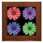 Four Color African Daisy Framed Tile