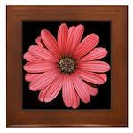 African Daisy Framed Tile