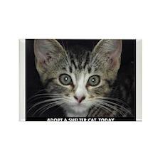 Shelter Cat Rectangle Magnet