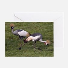 Gray Crowned Cranes Greeting Card