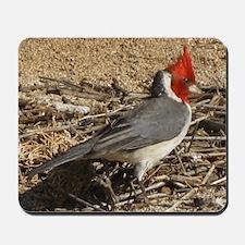 Molokai Cardinal Mousepad
