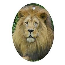 Lion - close up Oval Ornament