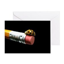 Ladybug on a Pencil Greeting Card