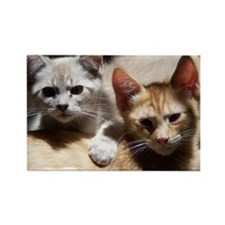 Rescue Kittens Rectangle Magnet