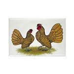 Sebright Golden Bantams Rectangle Magnet (10 pack)
