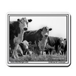 Cows look at camera, 1967, Iowa,Mousepad
