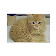 Rescue Kitten Rectangle Magnet