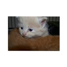 Rescue Kitten Photos Rectangle Magnet