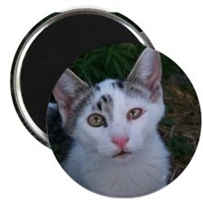 Rescue Kitten Photos Magnet