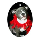 Grey pit bull puppy Oval Ornaments