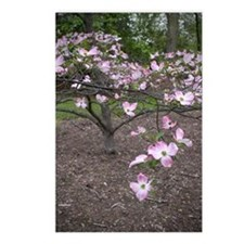 Dogwood Tree Postcards (Package of 8)