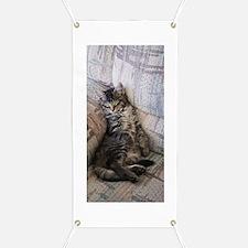Sleeping Kitten Banner