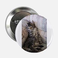 """Sleeping Kitten 2.25"""" Button"""
