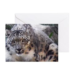 Snow Leopard Greeting Cards (Pk of 10)