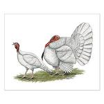 Turkeys: White Holland Small Poster