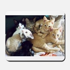 Rescue Kitten Photos Mousepad