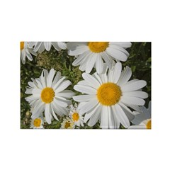 Daisies Rectangle Magnet (10 pack)