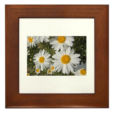 Daisies Framed Tile