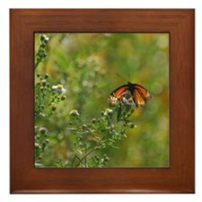 Viceroy Butterfly Framed Tile