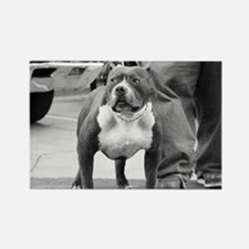 American Staffordshire Terrie Rectangle Magnet (10
