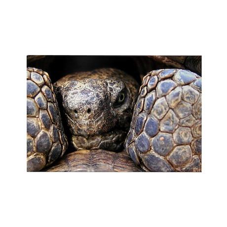 Desert Tortoise Rectangle Magnet (10 pack)