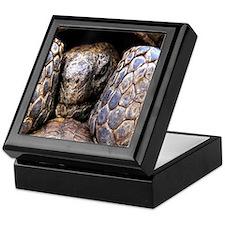 Desert Tortoise Keepsake Box