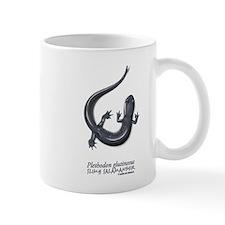 Plethodon glutinosus Mug