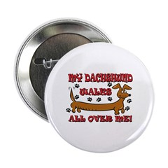 My Dachshund Walks All Over Me 2.25
