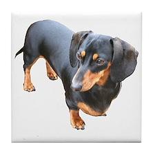 'Lily Dachshund Dog' Tile Coaster