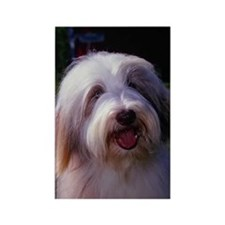 Bearded Collie Photo Rectangle Magnet