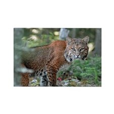 Maine Bobcat Rectangle Magnet