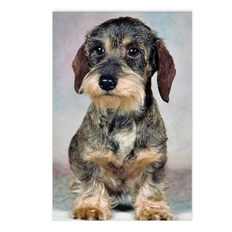 Wirehaired Dachshund Postcards (Package of 8)