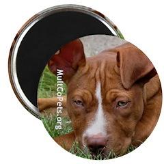 Amelia the Dog Magnet