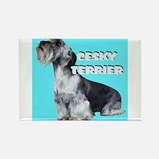 Cesky Terrier portrait Rectangle Magnet
