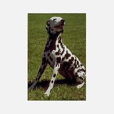 Dalmatian Photo Rectangle Magnet