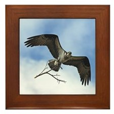 Female Osprey Framed Tile