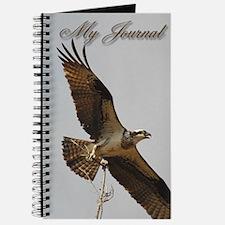 Female Osprey Journal