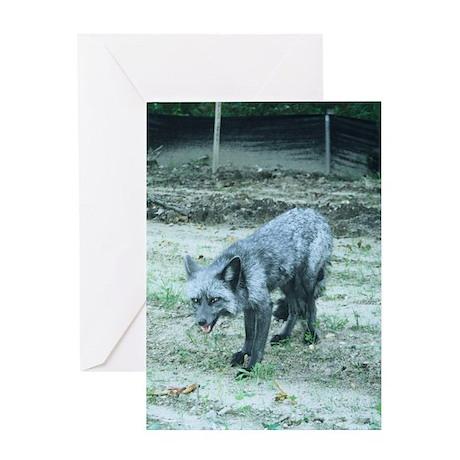 Silver Fox Greeting Card