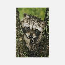 Baby Raccoon Rectangle Magnet