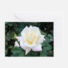 Beautiful Rose Greeting Card