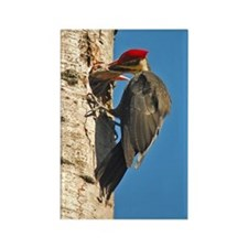 Pileated Woodpecker Family Rectangle Magnet
