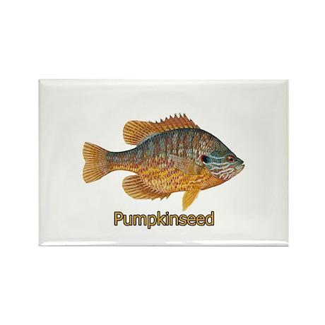 Pumpkinseed Sunfish Rectangle Magnet