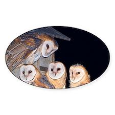 Four Owlets Sticker (Oval)