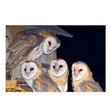 Four Owlets Postcards (Package of 8)