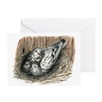 Nesting Pigeons Greeting Cards (Pk of 10)