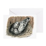 Nesting Pigeons Greeting Card