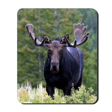 Bulll Moose Mousepad