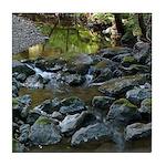 Redwood Creek at Muir Woods Tile Coaster (1)